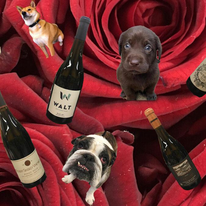 Puppies-Pinot